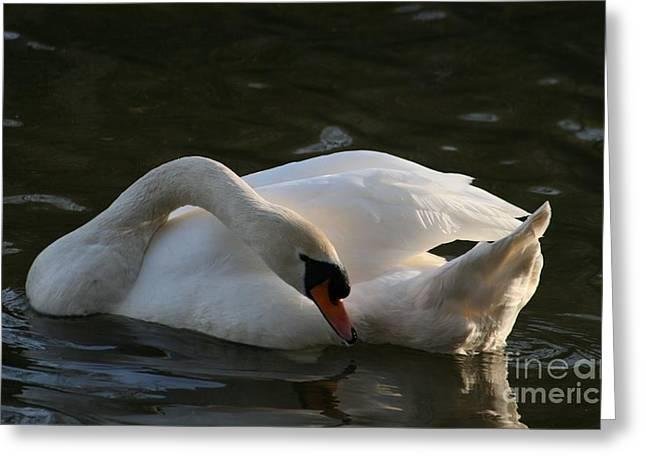 Swan Lake Story Greeting Card by Valia Bradshaw