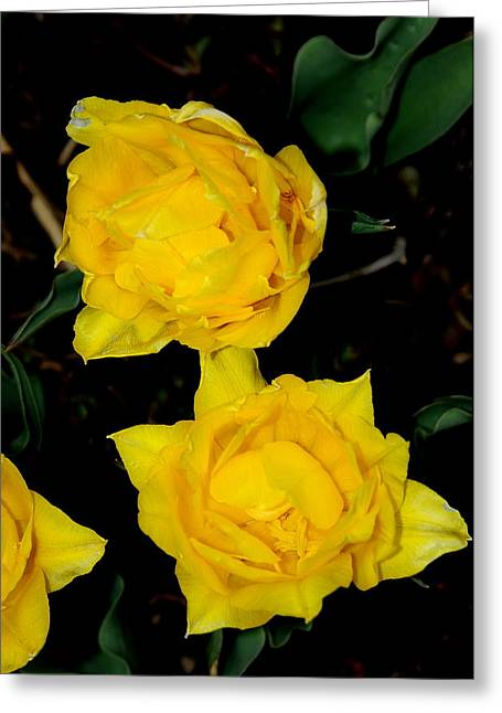 Yellow Flowers Greeting Card by Patrick  Short