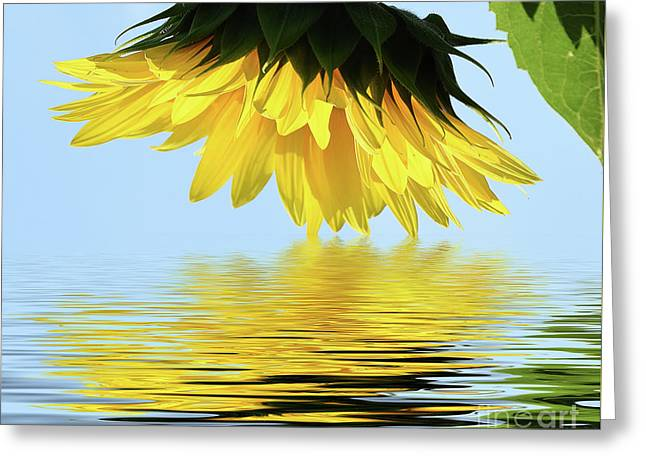 Nice Sunflower Greeting Card by Elvira Ladocki