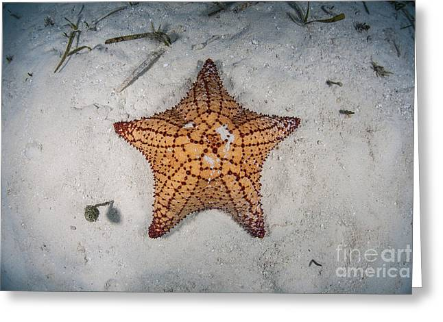 A West Indian Starfish On The Seafloor Greeting Card