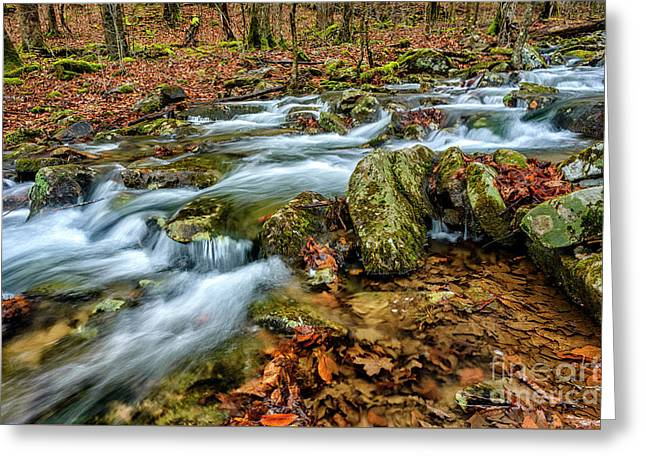 Greeting Card featuring the photograph Aldrich Branch Monongahela National Forest by Thomas R Fletcher