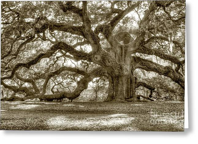 Mosses Greeting Cards - Angel Oak Live Oak Tree Greeting Card by Dustin K Ryan