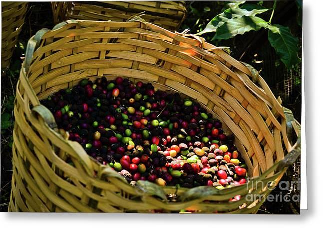 Coffee Culture In Sao Paulo - Brazil Greeting Card by Carlos Alkmin
