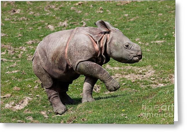 Indian Rhinoceros Rhinoceros Unicornis Greeting Card by Gerard Lacz
