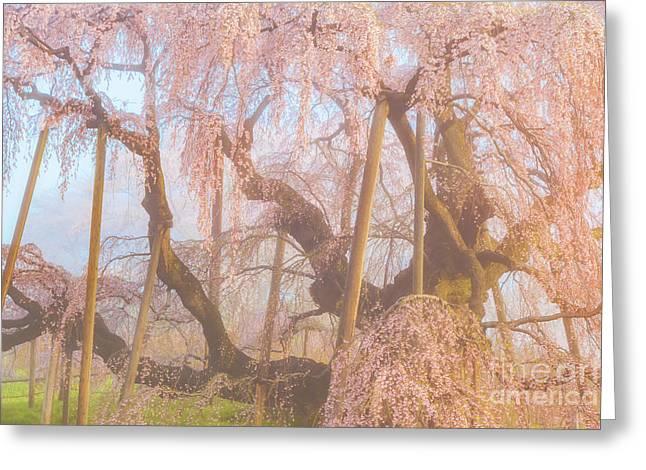 Greeting Card featuring the photograph Miharu Takizakura Weeping Cherry07 by Tatsuya Atarashi