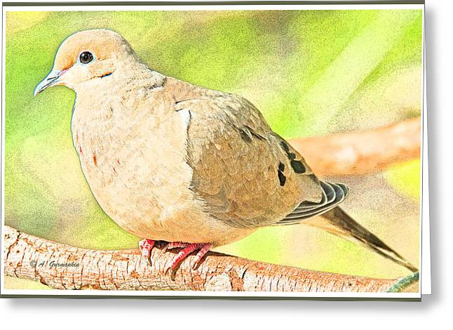 Mourning Dove Animal Portrait Greeting Card
