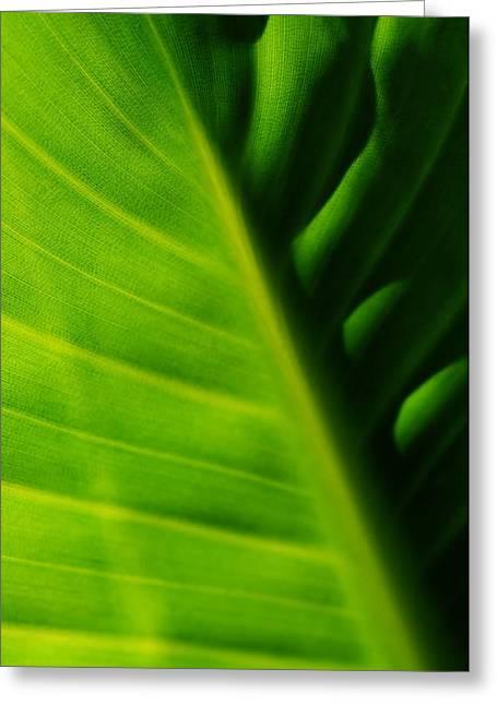 new Banana leaf Greeting Card by Werner Lehmann