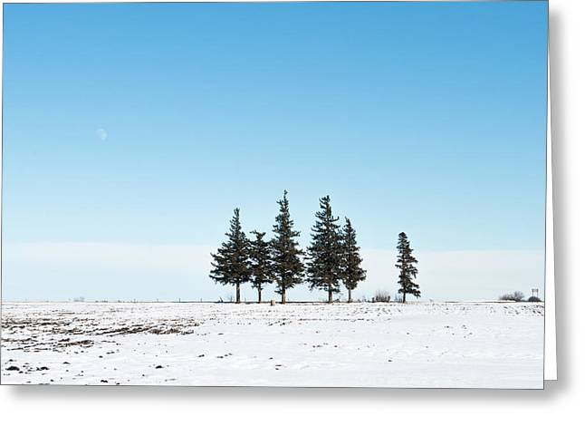 6 Pines And The Moon Greeting Card