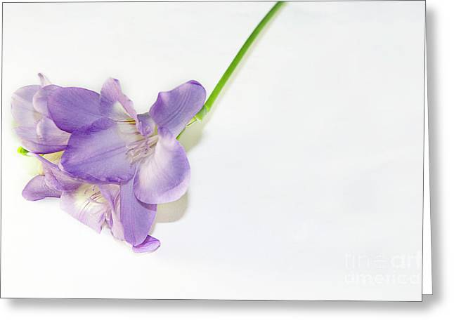 Purple Freesia Greeting Card by Elvira Ladocki