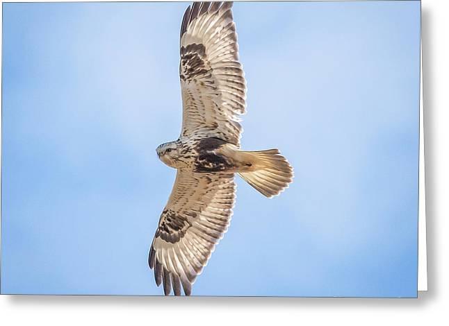 Rough-legged Hawk Greeting Card