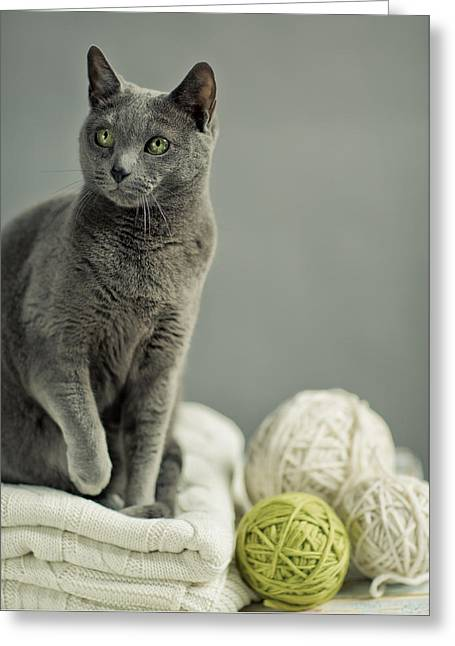 Russian Blue Greeting Card by Nailia Schwarz