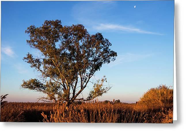 Sunrise In The Ditch Burlamacca Greeting Card