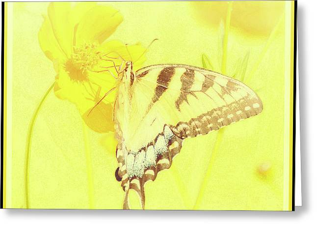 Tiger Swallowtail Butterfly On Cosmos Flower Greeting Card