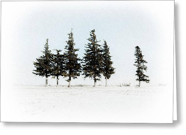 6 Trees Greeting Card