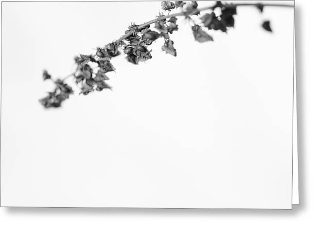 Untitled Greeting Card by Gabriela Insuratelu
