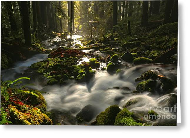 Sol Duc Rainforest Highlights Greeting Card by Adam Jewell