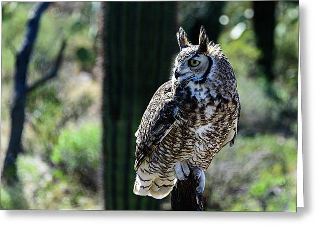 Birds Of Prey - Great Horned Owl Greeting Card by Jon Berghoff