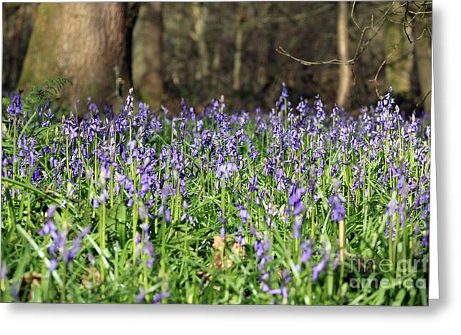 Bluebells At Banstead Wood Surrey Uk Greeting Card