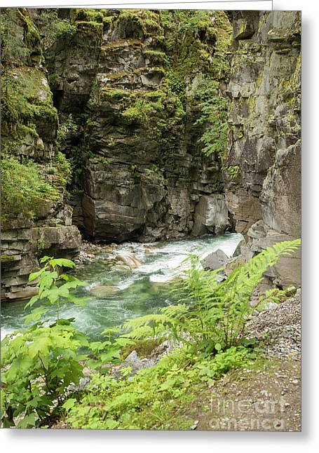 Coqhuihalla River, Bc, Canada Greeting Card by Patricia Hofmeester
