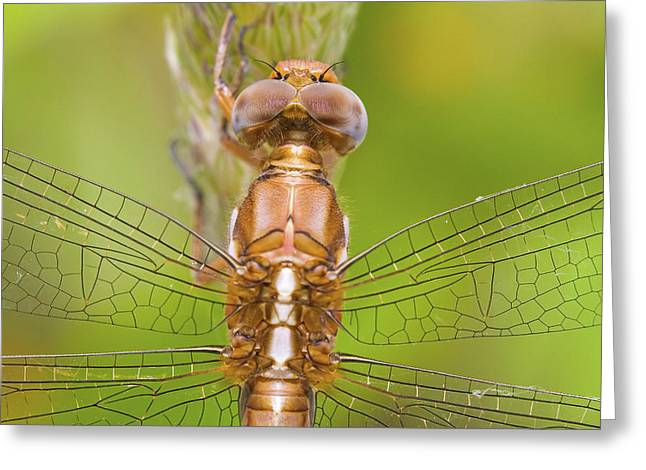 Dragonfly Greeting Card by Andre Goncalves