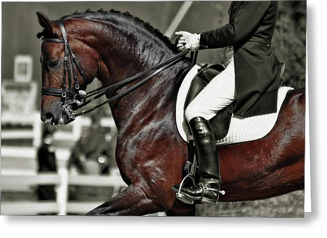 Dressage Best  Greeting Card by JAMART Photography