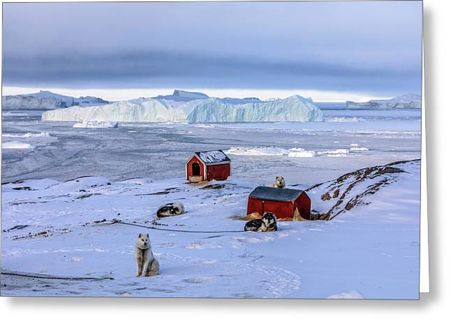 Huskies In Ilulissat, Greenland Greeting Card
