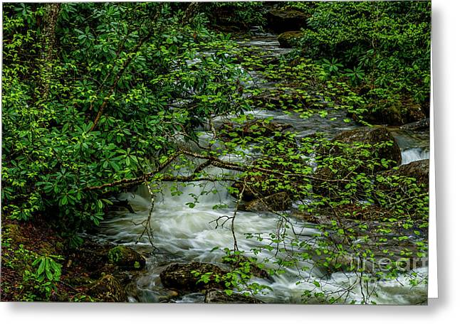 Greeting Card featuring the photograph Kens Creek Cranberry Wilderness by Thomas R Fletcher