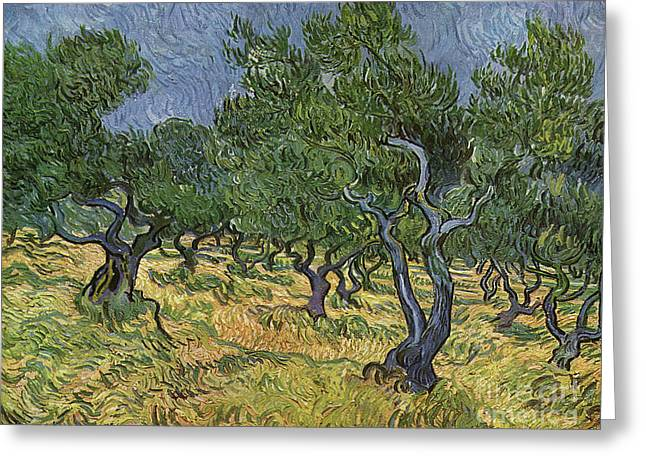 Olive Orchard Greeting Card