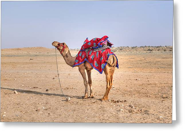Thar Desert - India Greeting Card