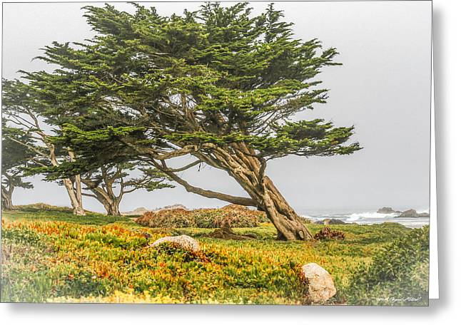 #7803 - Monterey, California Greeting Card