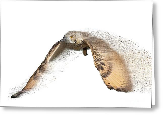 barn owl, Tyto alba in flight  Greeting Card