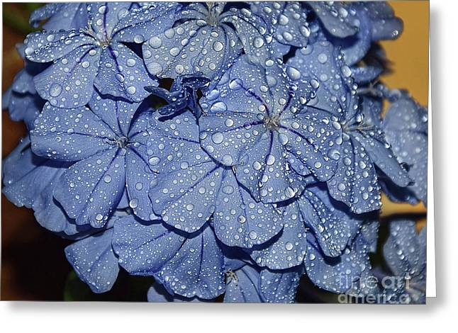 Blue Plumbago Greeting Card by Elvira Ladocki