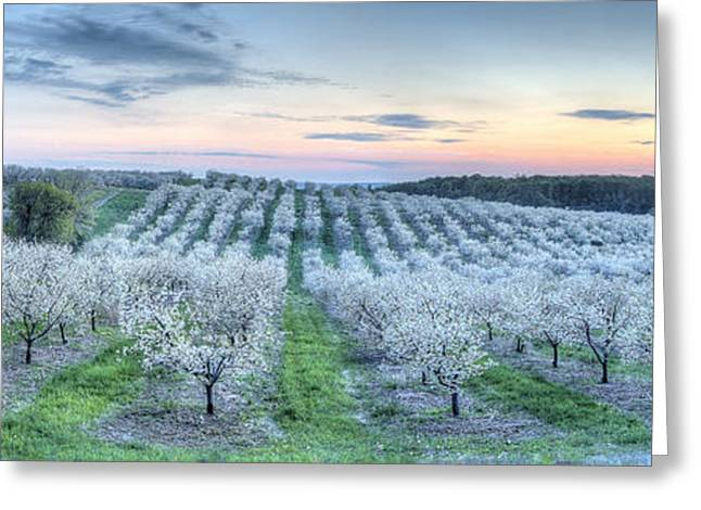 Cherry Blossoms In Traverse City Greeting Card by Twenty Two North Photography