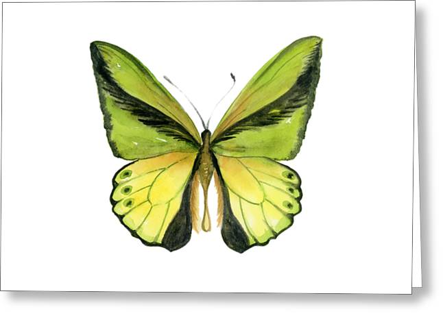 8 Goliath Birdwing Butterfly Greeting Card