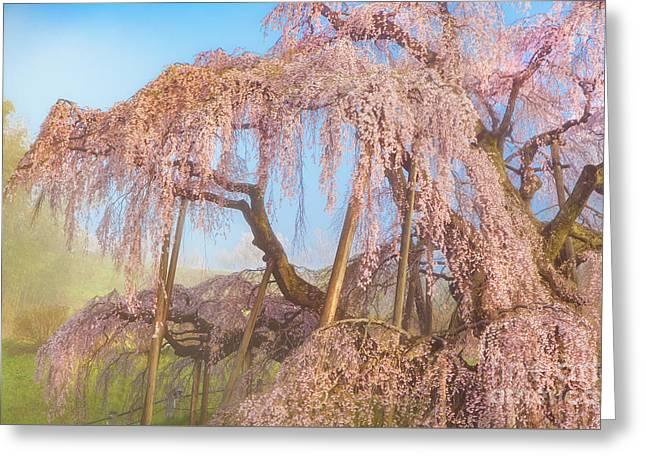 Greeting Card featuring the photograph Miharu Takizakura Weeping Cherry08 by Tatsuya Atarashi