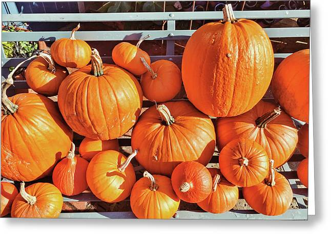 Pumpkins Greeting Card by Tom Gowanlock