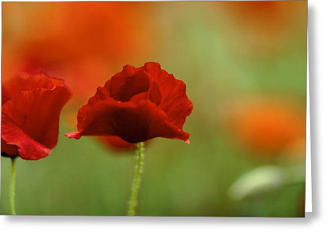 Summer Poppy Meadow Greeting Card by Nailia Schwarz