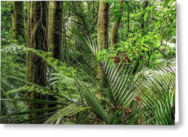 Greeting Card featuring the photograph Tropical Jungle by Les Cunliffe
