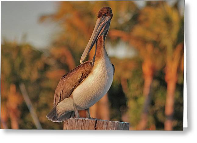 Greeting Card featuring the photograph 9- Brown Pelican by Joseph Keane