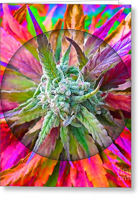 Cannabis 420 Collection Greeting Card