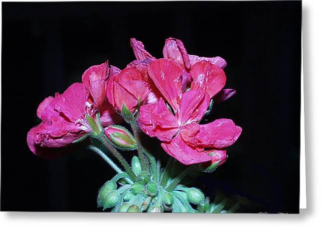 Flower Greeting Card by Diane Falk