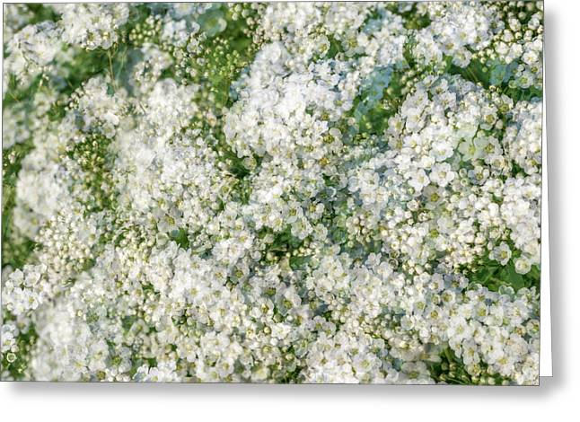 Spring Season - Inspired By Jackson Pollock Greeting Card