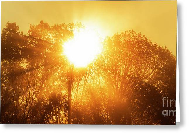 Sunrise And Fog Greeting Card by Thomas R Fletcher