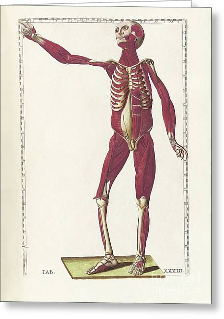 The Science Of Human Anatomy Greeting Card