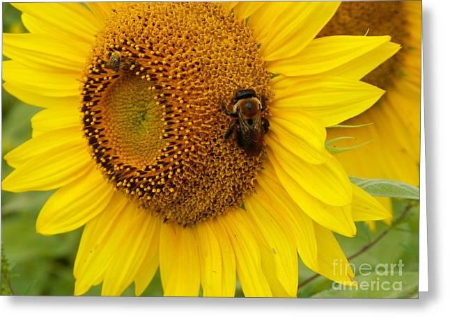 #933 D966 Honey Do Checklist Colby Farm Sunflowers Greeting Card