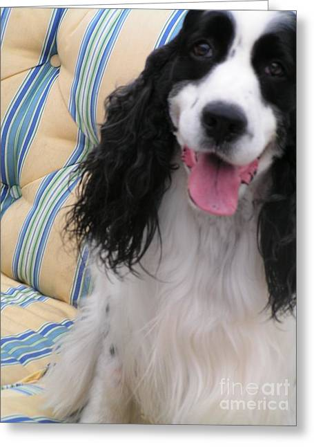 #940 D1037 Farmer Browns Springer Spaniel Happy Greeting Card by Robin Lee Mccarthy Photography