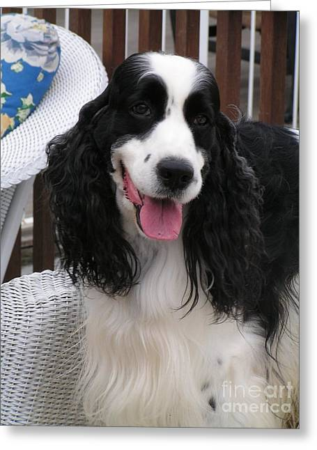 #940 D1038 Farmer Browns Springer Spaniel Adorable Happy Greeting Card by Robin Lee Mccarthy Photography