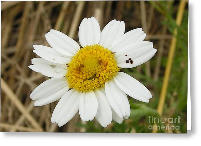 #940 D1115 Farmer Browns West Newbury Grin And Bear It Greeting Card by Robin Lee Mccarthy Photography