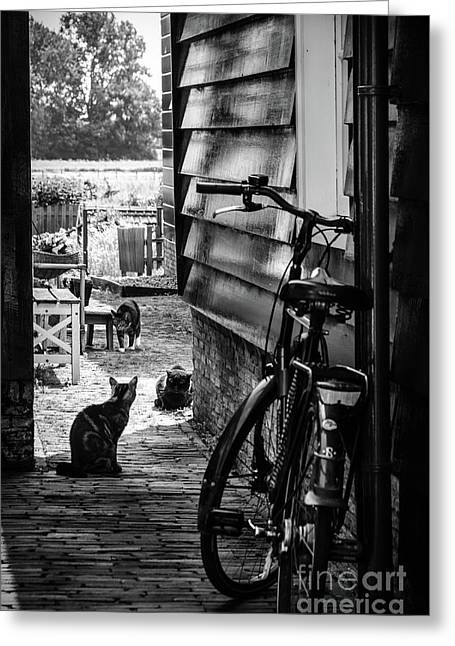 A Backstreet With Cats And Bicycle In Marken B/w Greeting Card