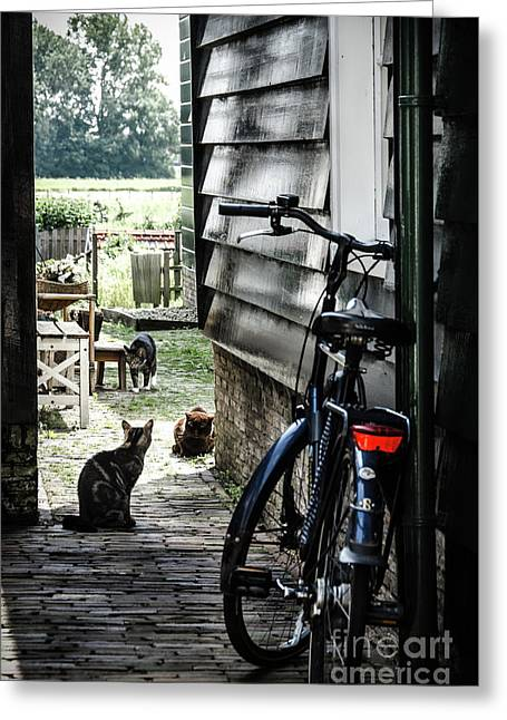 A Backstreet With Cats And Bicycle In Marken Greeting Card